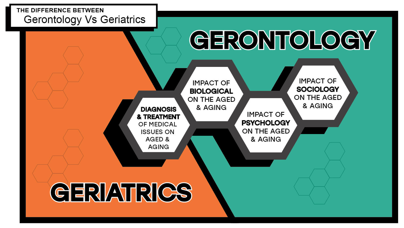 Differences Between Gerontology and Geriatrics Infographic